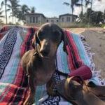 Dog Friendly Beaches in Miami