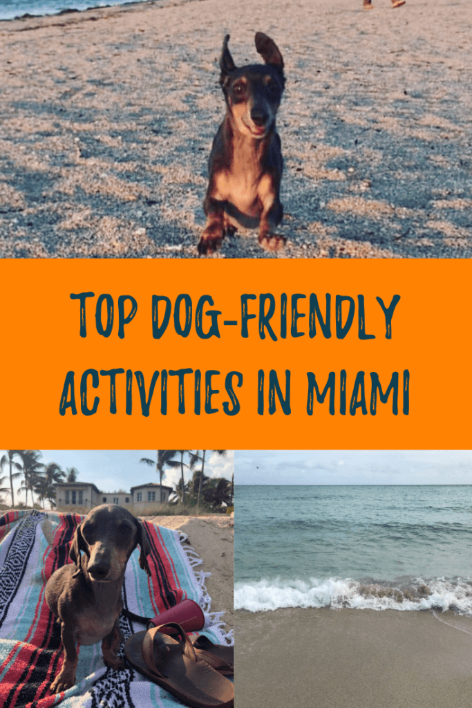 I list my top dog-friendly beaches in Miami, Florida. Learn where to go in South Florida when you have a dog.