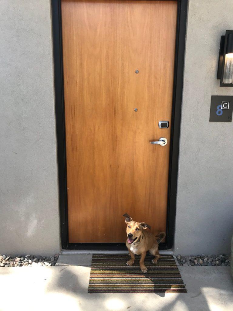 Dog-Friendly Andaz Scottsdale Resort