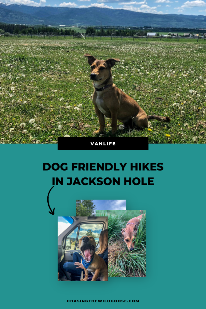 Dog Friendly Hikes in Jackson Hole