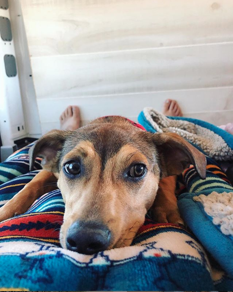 Tips for vanlife with a puppy