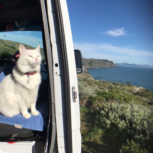 vanlife with a cat - samvanzan